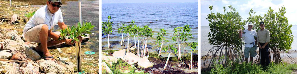 Mangrove Habitat Creation