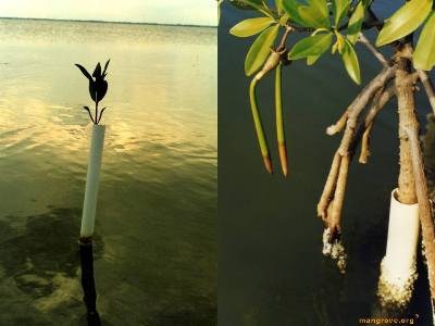 REM Principle Mangrove of Isolation