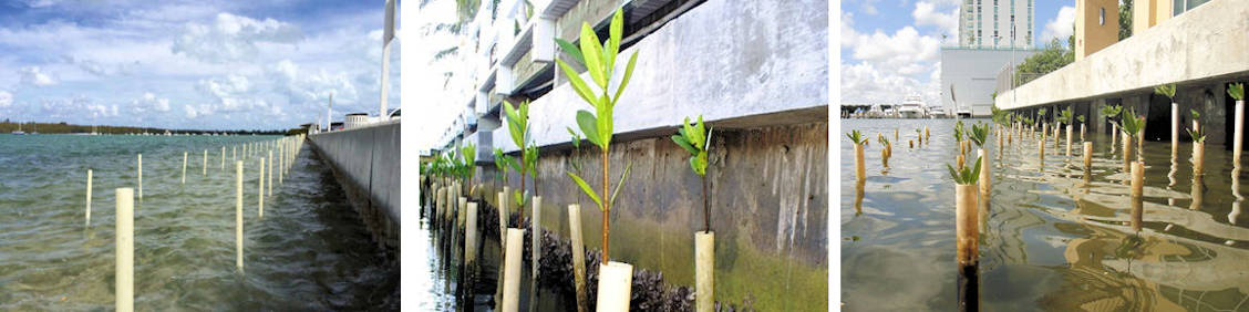 Mangrove Sustainable Development