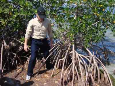 Mangrove Reforestation Technology