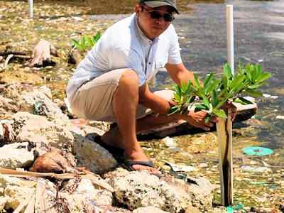 Mangrove Shoreline Stabilization