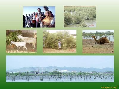 Agroforestry and Sustainable Eco-Systems